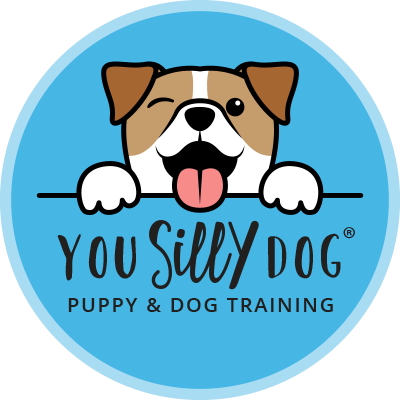 You Silly Dog Puppy and Dog Training